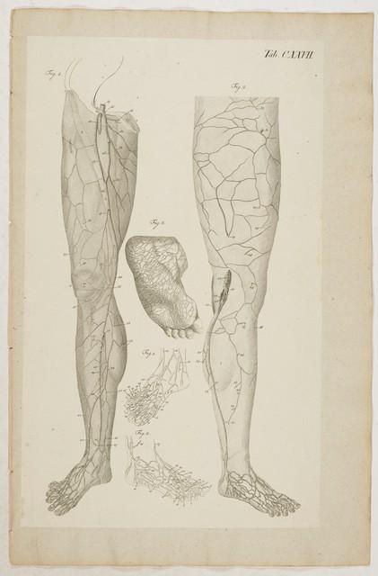 unterschenkel anatomie