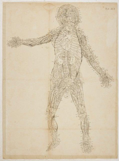 Loder, Justus Christian v. Anatomische Tafeln: Die vorderen und die ...