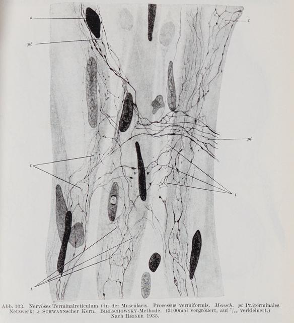 Stöhr, Philipp (Jr.) Handbuch der mikroskopischen Anatomie des ...