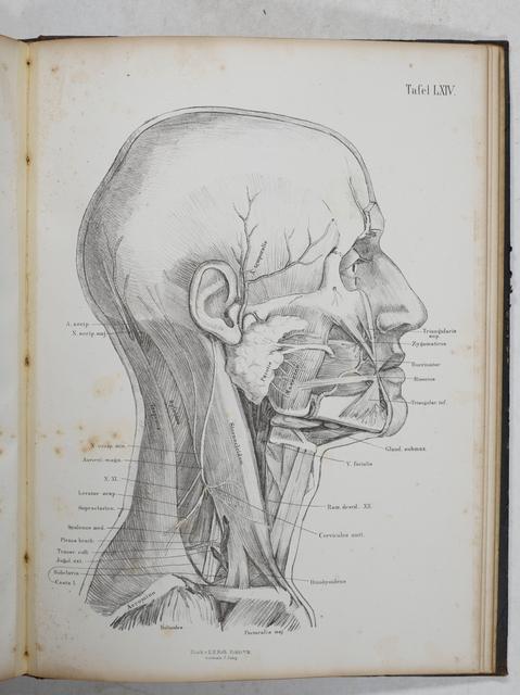 Henke, Phillip Jacob Wilhelm Atlas der topographischen Anatomie des ...