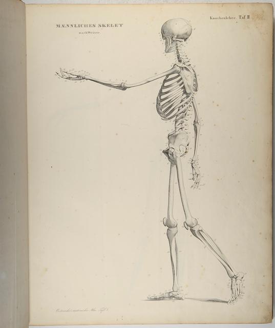 Oesterreicher, Heinrich Anatomischer Atlas oder bildliche ...