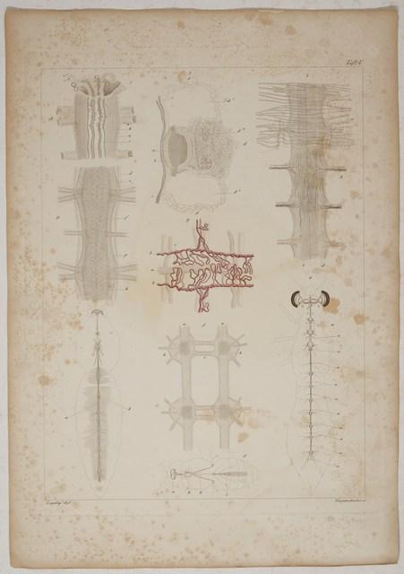Leydig, Franz v. Tafeln zur vergleichenden Anatomie. Erstes Heft ...